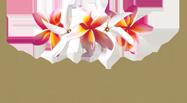 pure-fiji-logo